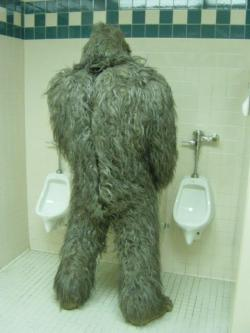 Another Bigfoot Sighting
